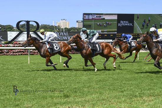 Newcomer To Resume At Randwick Saturday