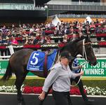 Filly Carrying Stable's Sandown Hopes