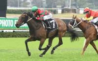Stablemates Likely For Canterbury