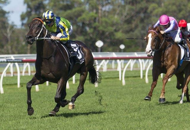 "Dal Cielo Ready To Get The ""Jump"" On Brisbane Rivals"