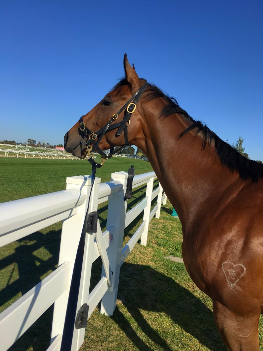 Star Fillies Chasing Thousand Guineas Births