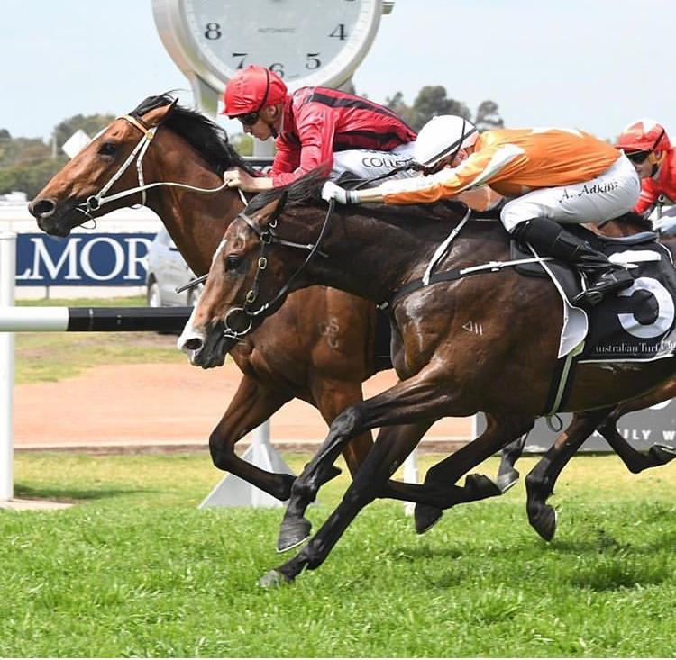 Gem Song On Path To Randwick Guineas Assignment