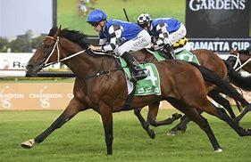 Red Cardinal On Track For Sydney Cup