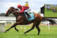 Gem Song Can Bounce Back In Doomben Cup