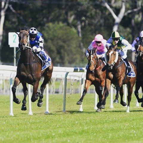 Belle Going From Taree Win To Doomben