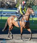 Newcastle Cup Day Runners - 15 September