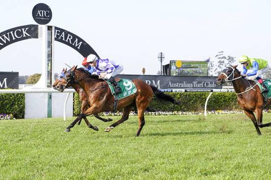 Great win by Gauguin at Warwick Farm yesterday