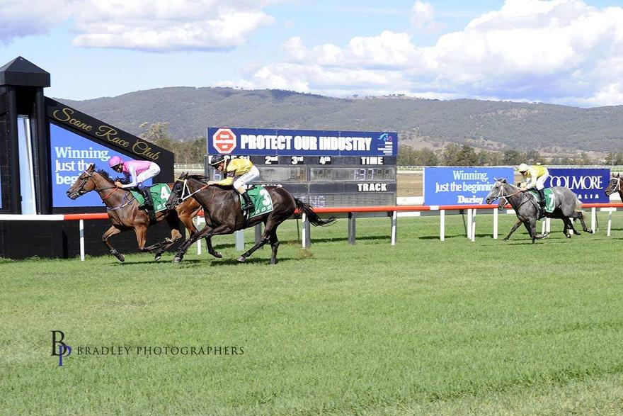 Mo The Great bound for Warwick Farm on Wednesday