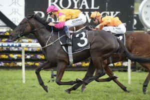 Shiraz lines up in the Winter Stakes at Rosehill Gardens