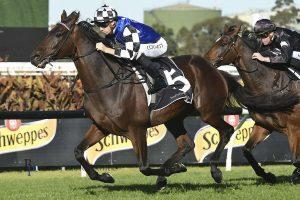 Busy Weekend of Racing at Rosehill and Newcastle!
