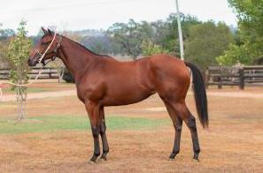 Scone Yearling Sales