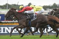 Hetty Heights to fly the flag for Kim Waugh Racing at Rosehill Gardens on Saturday