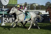 His Majesty set to resume at Rosehill Gardens on Saturday.