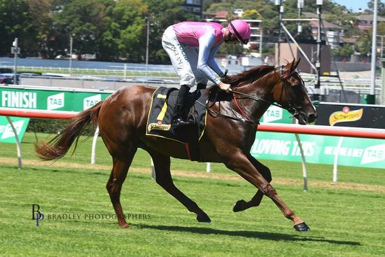 Oxford Tycoon Finishes Fighting 2nd on Heavy 8 at Rosehill