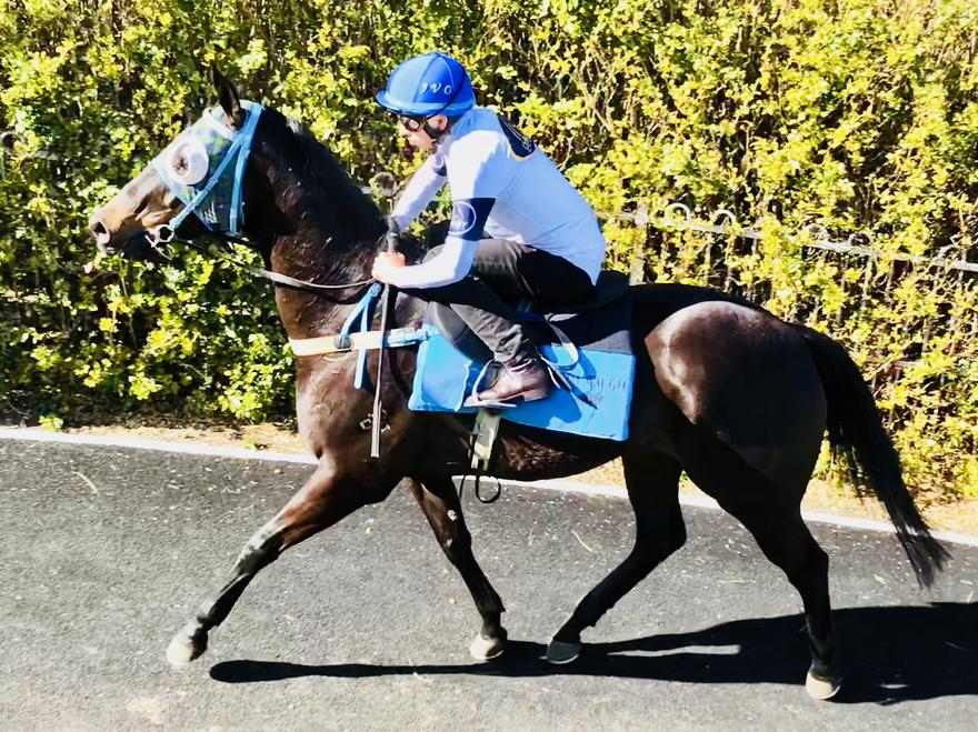 Impressive Trial Win from Starvino Today at Gosford!