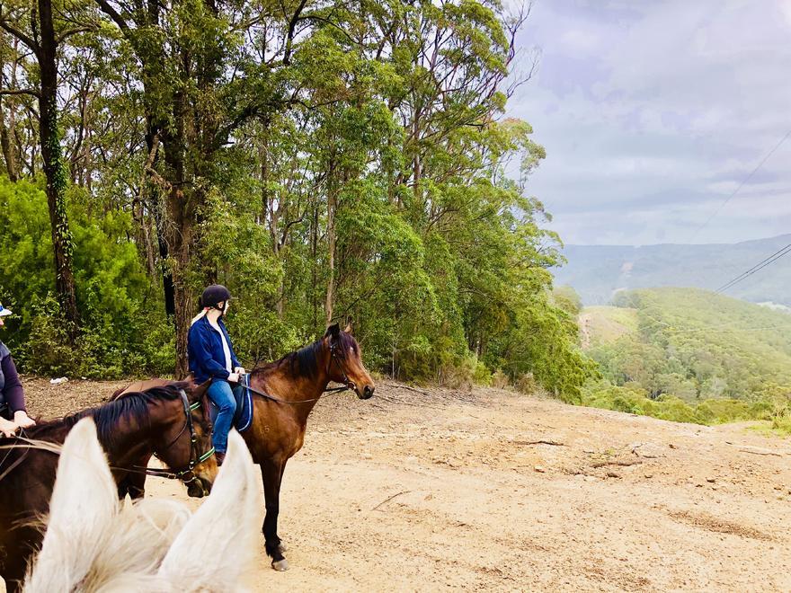 Off the Track Horses Enjoying Life at Mahtoum Lodge!