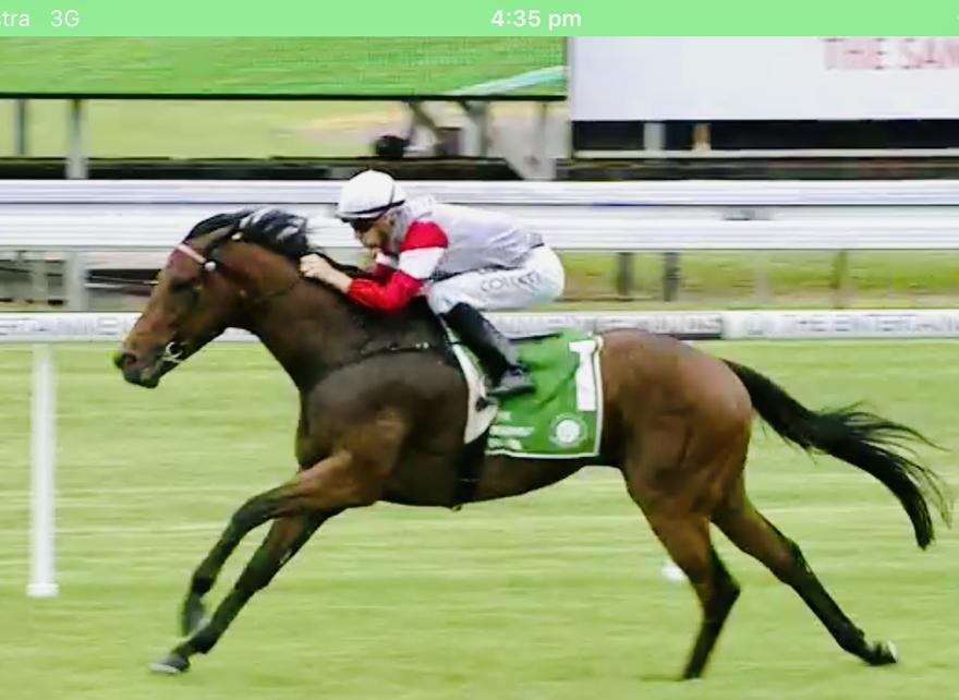 Safado Bolts in at Gosford Today!