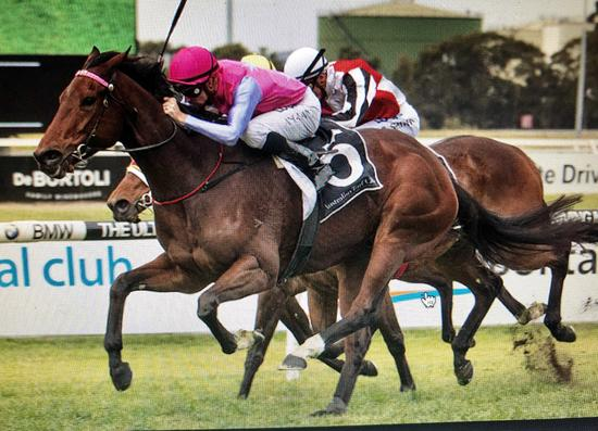 King Viv Steps up to 1800m on Wednesday at Randwick!