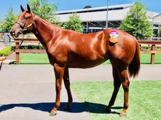 Rich Enuff Filly Takes Kim's Eye at the Inglis Classic Sale!