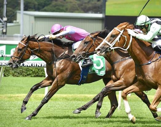 Goathland Wins first-up over 2000m today at Randwick!