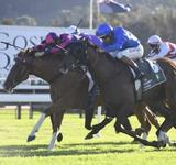 Win no 7 to White Boots on Wednesday at Gosford!