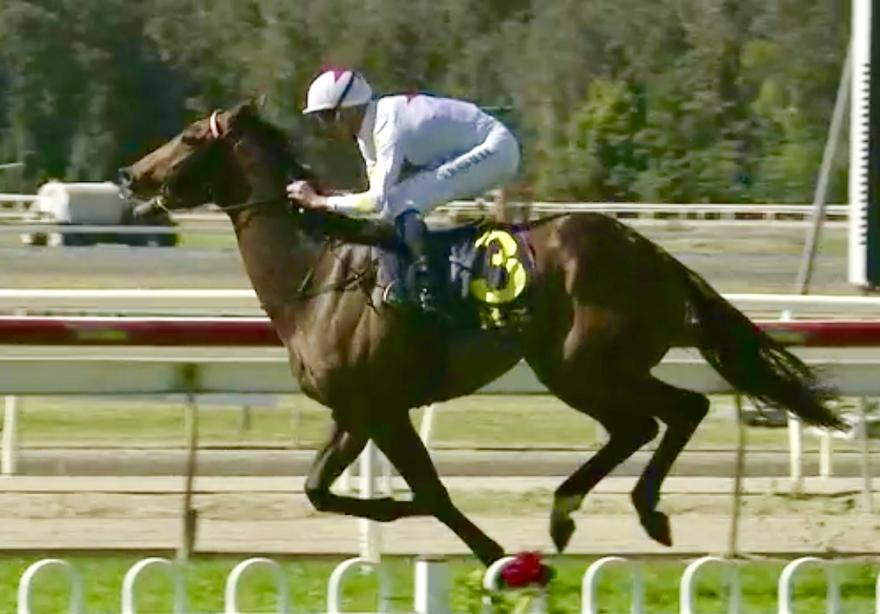 Sebonna Scores Impressive Maiden Win at Wyong on Sunday!
