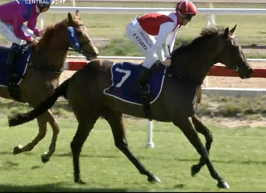 Sarah Elizabeth Scores Impressive Debut Win at Hawkesbury on Thursday!