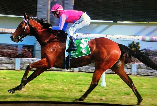Minifinn Scores Well-Deserved Win Today at Gosford!