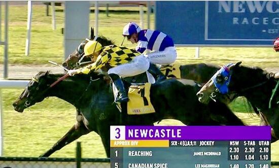 Blueblood Reaching Breaks Maiden at Newcastle!