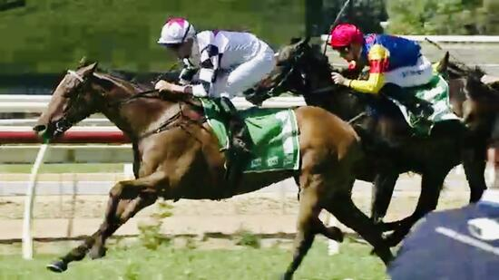 Super Effort by Destacado to Win at Wyong following long Lay-off!