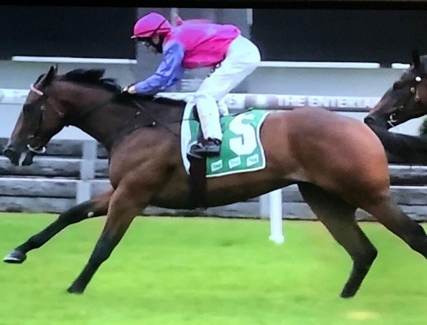 Talented 2yo Wins Impressively on Debut!