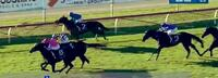 Linguee Resumes With Last-to-First Victory at Newcastle!