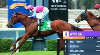 Filly on Debut Scores impressively at Wyong