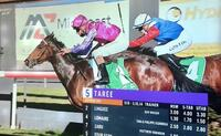 Linguee Makes it 3 wins from 6 Starts at Taree on Tuesday!