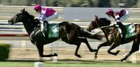 Different Strokes Breaks Through at Wyong on Cup Day!