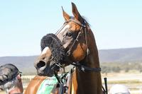 Goulburn Primed For Today's Return To Racing