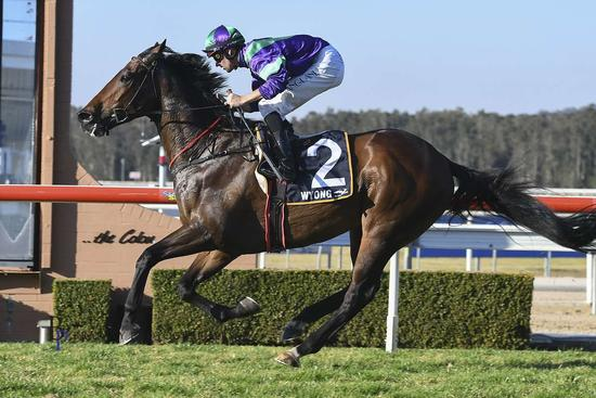 Golden Hits sings a winning tune at Wyong