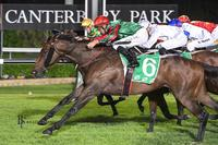 Fantastic Man salutes at Canterbury