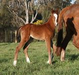 Larneuk Stud Welcomes New Foals