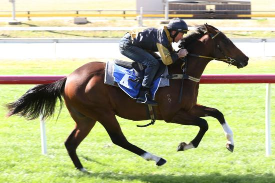 Gippsland Bloodstock's Inglis Ready To Run Sale