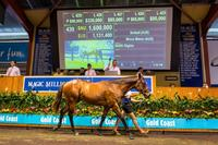 Magic Millions Shows Strength in Australia's Breeding Market