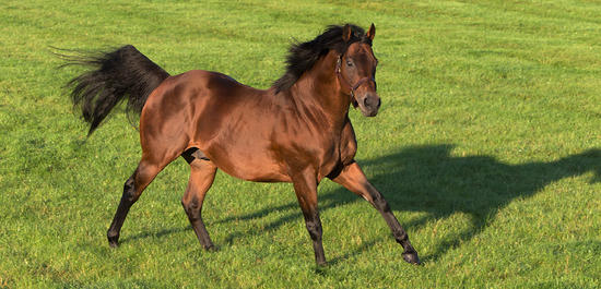 ​Dubawi Colt takes the Masar Godolphin Autumn Stakes