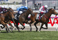 ​Fastnet Rock Dominates Flemington