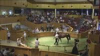Karaka Ready to Run Sale Update