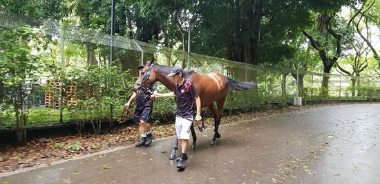 Singapore Racing: Sunday Selections