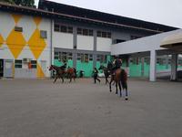 Singapore Horse Racing: Friday Night at Kranji
