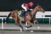 Larneuk Stud Well Represented at Singapore Races Tonight