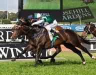 Cluster Yearlings Head to Magic Millions in Adelaide