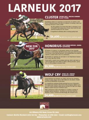 Australian Sires: Breeding Season Begins at Larneuk