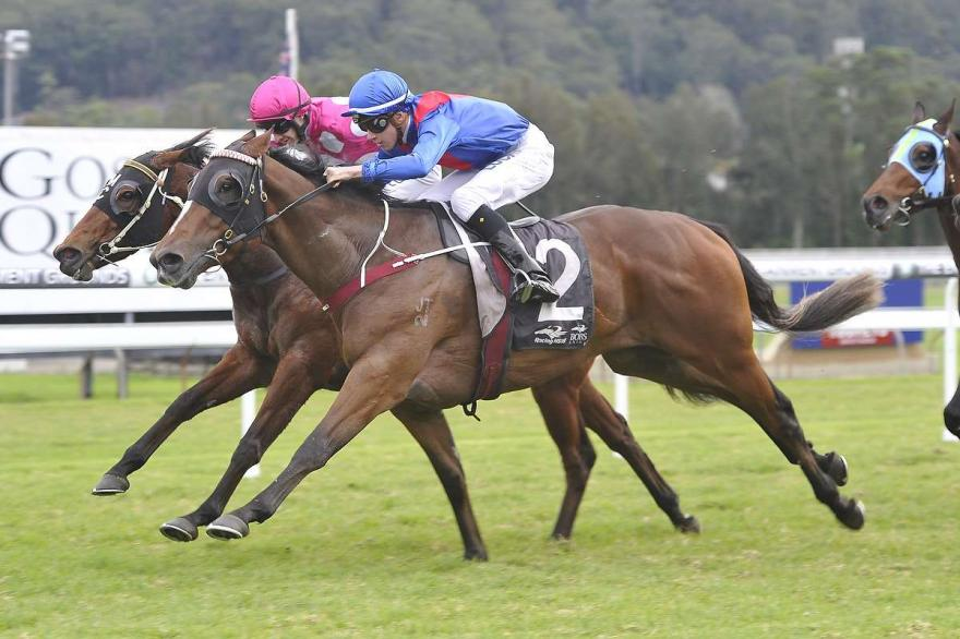 Snitzel Knight Claims Another